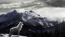 "Wolf and Mountains . Panoramic Picture on Modern Box-Canvas 20""x 36"""