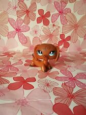 littlest pet shop - petshop -  perro teckel  640