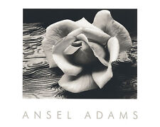 Ansel Adams Rose And Driftwood art print flower floral black white 16x20 poster