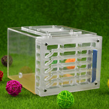 "Ant Housing Ant Farms Insect Cage Tank Plastic acrylic Display Box 6""x5""x4"""