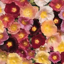 Hollyhock Seeds Happy Lights Mix Holly Hock Seeds TALL Hollyhock 50 Seeds