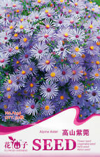 1 Pack 50 Alpine Aster Seeds Aster Alpinus Asteraceae Garden Flowers A236