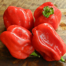 20 Red Savina Pepper Seeds Hot Vegetables Good Taste Easy Growing TT313