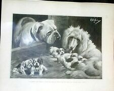 WHO'S THE DADDY ?  PUPPIES ENGLISH BULLDOG AFGHAN EARLY LIFE MAGAZINE REPRINT