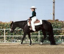 """BLACK 1.25# 34-36"""" New Show Horse KATHY'S TAIL Extension FREE US Shipping & bag"""