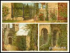 Farb Lithografie Kletterrose Wilder Wein Efeu Hopfen Trichterwinde 1909 Original