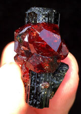 62CT New Find Raw Natural Garnet &Tourmaline Crystal Symbiosis Specimens ip0667