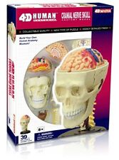 4D Vision Human Cranial Nerve Skull Anatomy Model Kit - Puzzle 26053