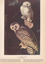 """1942 Vintage AUDUBON BIRDS #121 """"SNOWY OWL"""" BEAUTIFUL Color Art Plate Lithograph"""