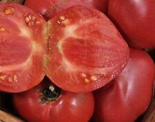 15 Graines/Seeds de Tomate Ancienne - Variété : Anna Russian - BIO