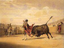 Pintura Sport Corrida De Toros Matador suerta de la capa sangre toro Poster CC3733