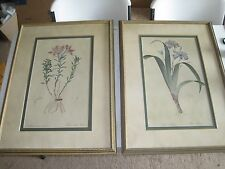 Two Custom Framed Old Iris & Alstroemeria Botany plant art prints 30x22""