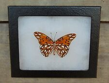 E353) Real GULF FRITILLARY VeRsO 4X5 Agraulis vanillae Framed butterfly insect