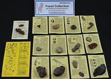 13 pc. Fossil Collection with Id Cards & Trilobite, Sharks Tooth... Educational