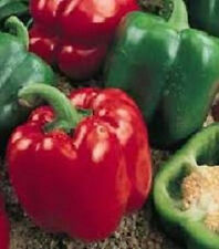 200 PEPPER SEEDS SWEET YOLO WONDER PEPPER SEEDS