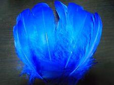 lot 30 plumes bleues 17 cm