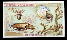 chromo AIGUEBELLE-les coquillages-LE SEICHE,L'ARGONAUTE
