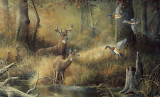 "October Memories Deer Ducks Hunting Scene Wallpaper Wall Mural 13' 8"" x 8' 3"""