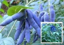Die Blaugurke + Erde Sichtschutz für den Balkon das Haus Balkonblume Gemüse Duft