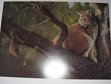 OUT ON A LIMB BOB CAT PRINT BY TOM MANSANAREZ
