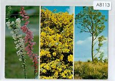 A8113cgt Australia flowers and Trees postcard