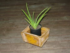 Vintage Shabby Chic Solid Timber Flower / Plant Pot - French Provincial style