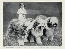 OLD ENGLISH SHEEPDOG LITTLE GIRL AND THREE DOGS CHARMING OLD 1934 DOG PRINT