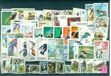 UCCELLI - BIRDS  50 diversi  lotto 3