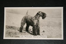 Kerry Blue Terrier  Hell-Of-A--Fellow 1930's Show Champion  Photo Card  VGC