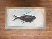 Nice Rare Large Framed Fossil Fish Diplomystus Dentatus excellent Museum quality