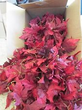 450 Wholesale Artificial Leaf Fake RED Leaves Wedding Silk Flower Craft DIY