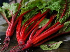 300 Ruby Red Swiss Chard Seeds Silverbeet *Free Gift* - COMB S/H