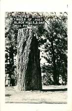 BLACK HILLS SD PETRIFIED STUMP TIMBER OF AGES REAL PHOTO POSTCARD c1950s
