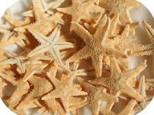 Natural Starfish 3cm-4cm (Pack of 5) Craft Starfish, Seashells, Small Star Fish