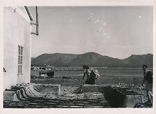 ÎLE DE MAJORQUE c. 1935 - Filets de Pêche à Cala Major  Espagne - Div 6409