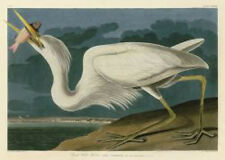 Great White Heron John James Audubon Wildlife Bird Nature Print Poster 16x24