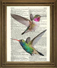 "VINTAGE DICTIONARY PAGE PRINT: Beautiful Humming Birds, Red, Green Art (8x10"")"