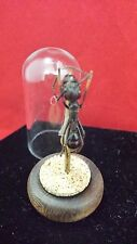 *Bullet Ant in Glass Dome Display//insect-science-classroom-insect-entomology