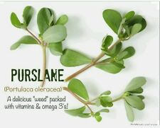 Purslane- 500 Seeds-Organic-Non GMO- Portulaca oleracea