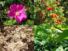 87 Mixed Native Wildlife Hedging Plants/ 10 m of 8 Varieties For Flowers & Fruit
