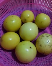 50 Yellow  Passion  Fruit seeds from Florida