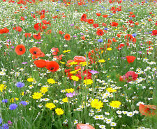WILD FLOWER SEEDS MEADOW MIX GRASS PREMIUM mix 10g