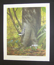 """Ray Harm Hand Signed Print """"White Breasted Nuthatch"""" w/Original Envelope"""