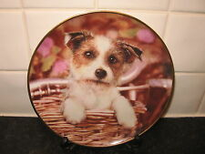 JACK RUSSELL DOG PLATE -  JACK IN THE BASKET     - DANBURY MINT