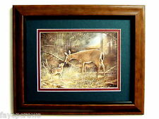 DEER PICTURE MULE DEER FAWN MATTED FRAMED 8X10
