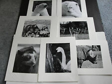 Set Of (7) Original  Photograph's of Animals by Bud Turner, PA.1970's-1980's!!