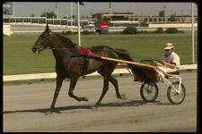206066 Harness Race Track A4 Photo Print