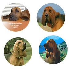 Bloodhound Magnets: 4 Cool Bloodhounds 4 your Fridge or Collection-A Great Gift