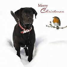 Black Labrador Christmas Cards Snowy Greeting, Pack of 10 Dog & Robin Xmas Cards