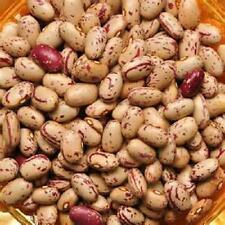 100 Seeds  French Horticulture bean seeds New seed for 2017 Non-Gmo,Heirloom